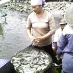 Muncar fishing village